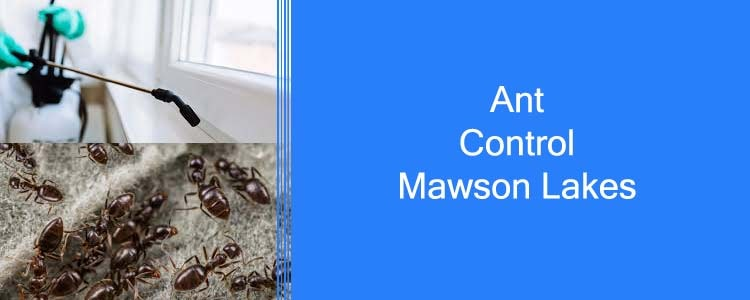 Ant Control Mawson Lakes